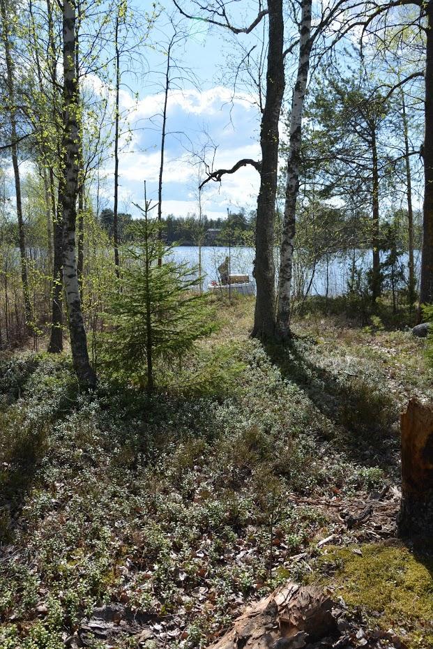 Ostrov, příroda, Finsko