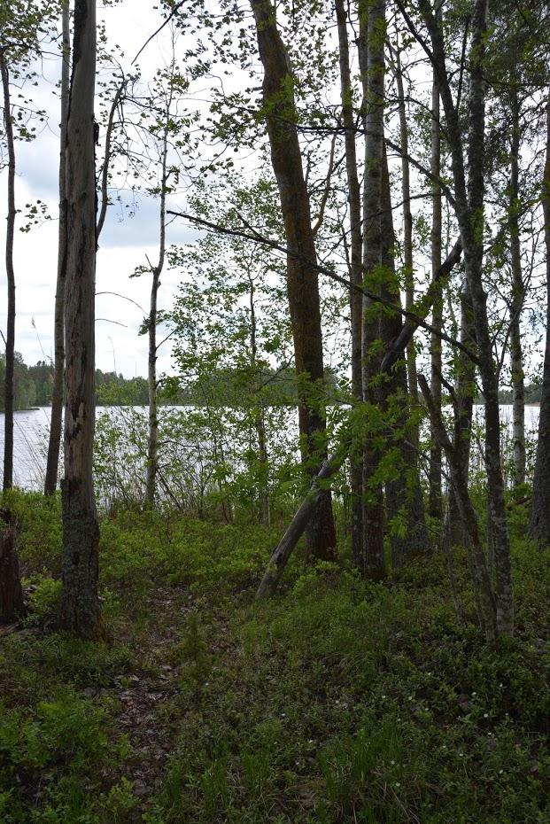 Finské jezero