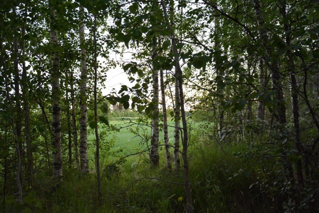 Finsko, světlé noci, les, příroda