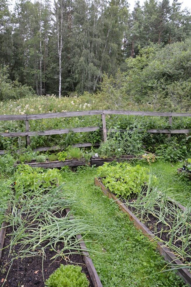 Zahrada, pěstování, vyvýšené záhony