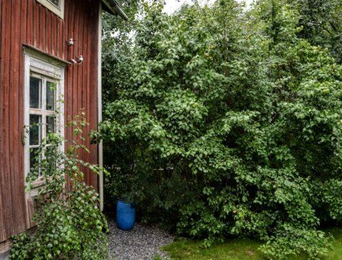 dřevostavba, Finsko, zahrada, déšť