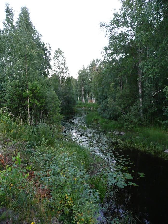 Les, příroda, Finsko, řeka