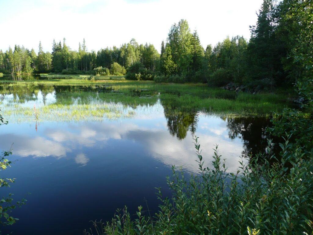 Finské jezero, příroda