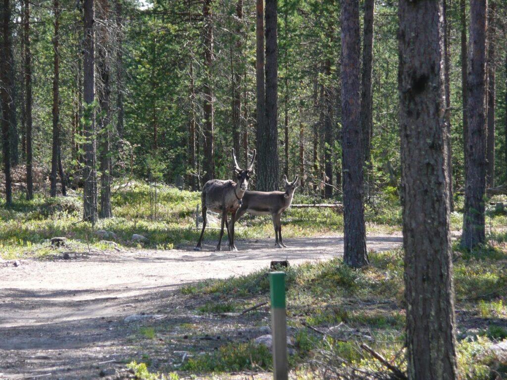 Sobi, Oulanka, Finsko