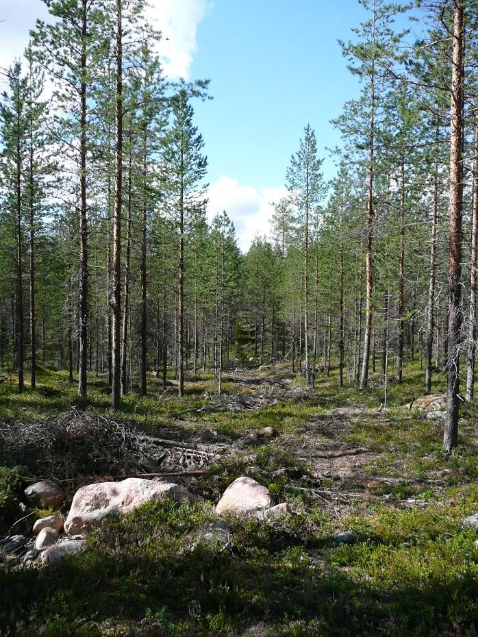 Finsko, Oulanka
