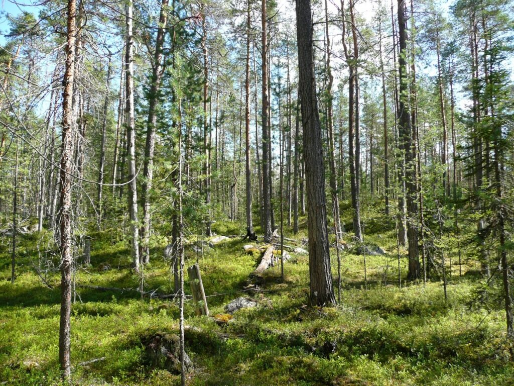 Oulanka, národní park