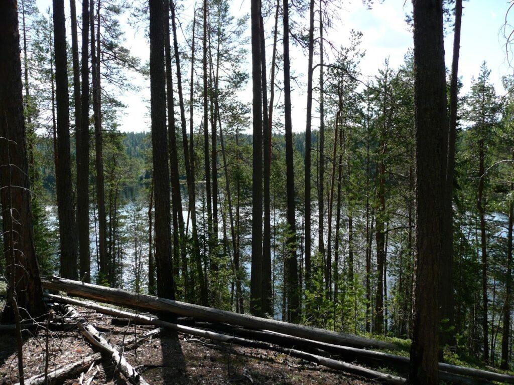 Finsko, les, jezero, Oulanka