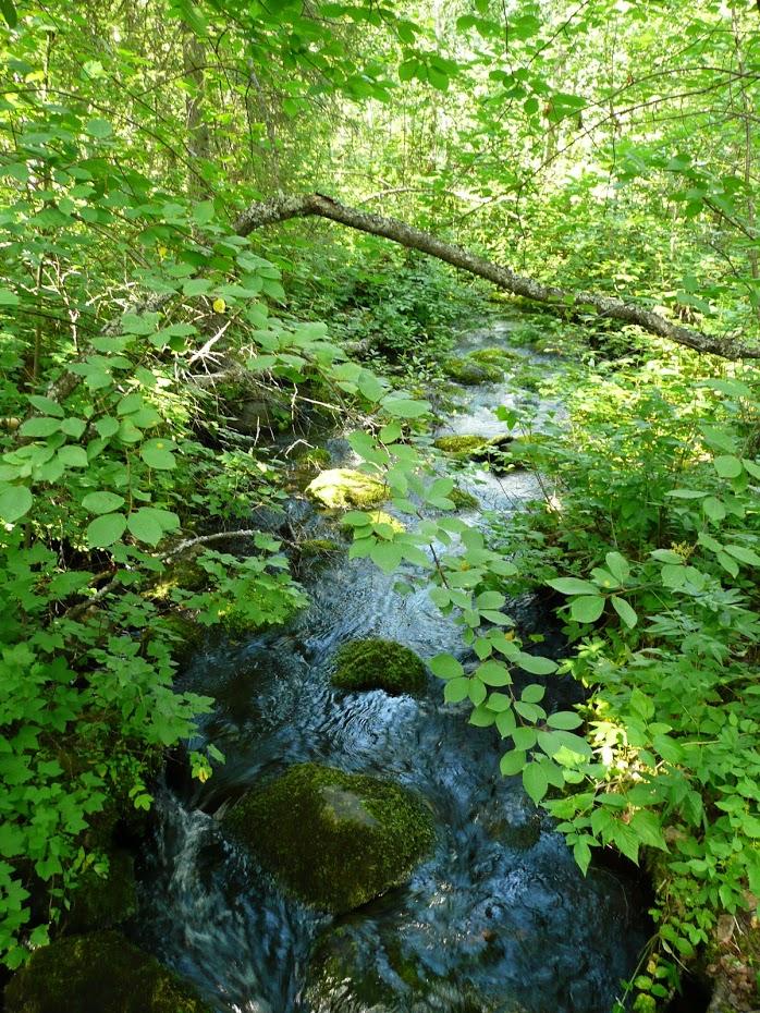 Finská příroda, Finsko