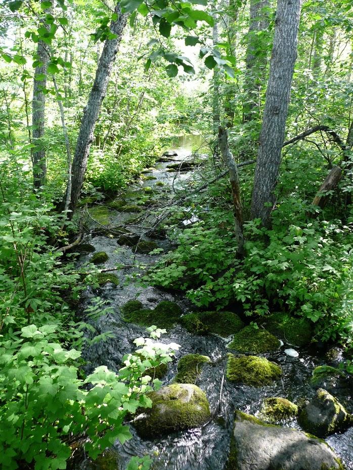 Finsko, příroda, řeka