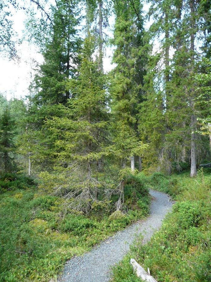 Národní park, Finsko
