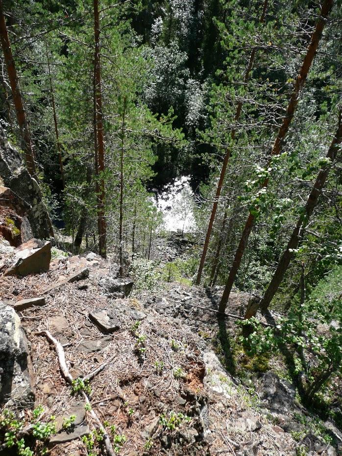 Oulanka, řeka, les