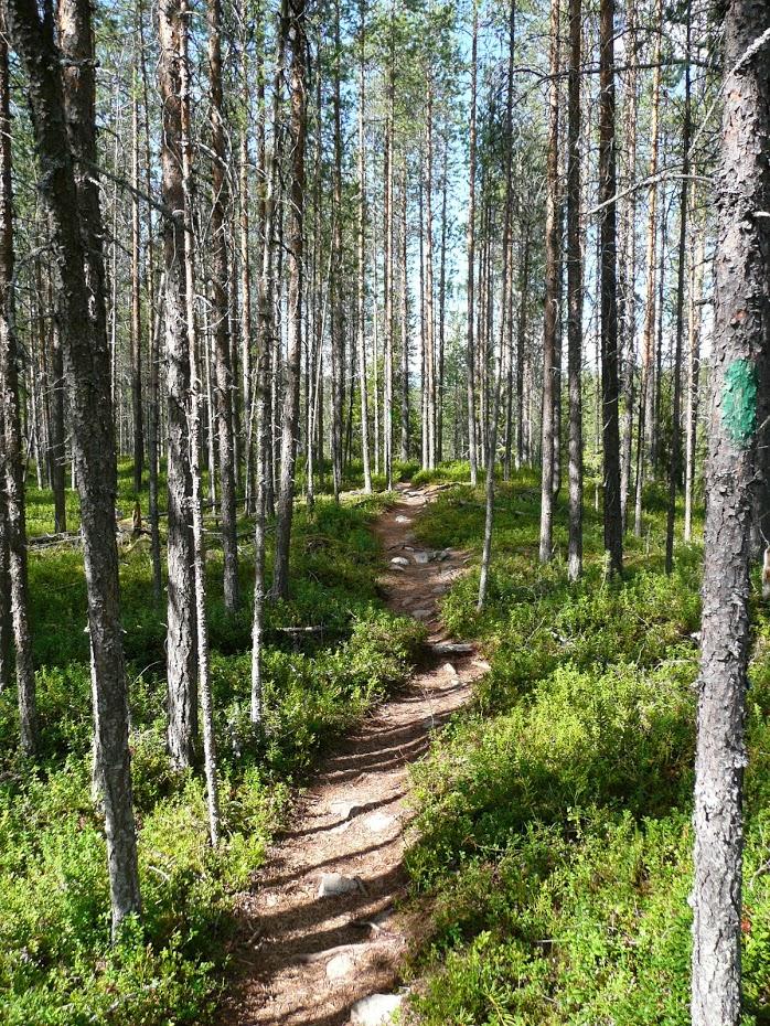 Lesní cesta, národní park, Finsko