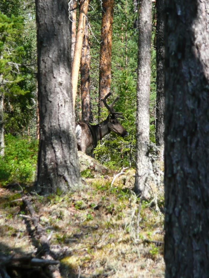 Sob, Oulanka národní park