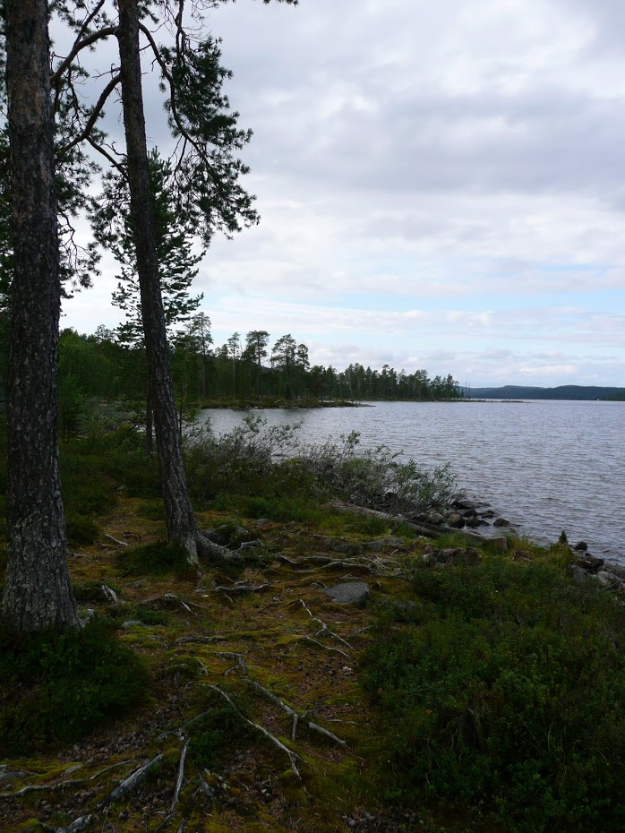 Finsko, jezero, les