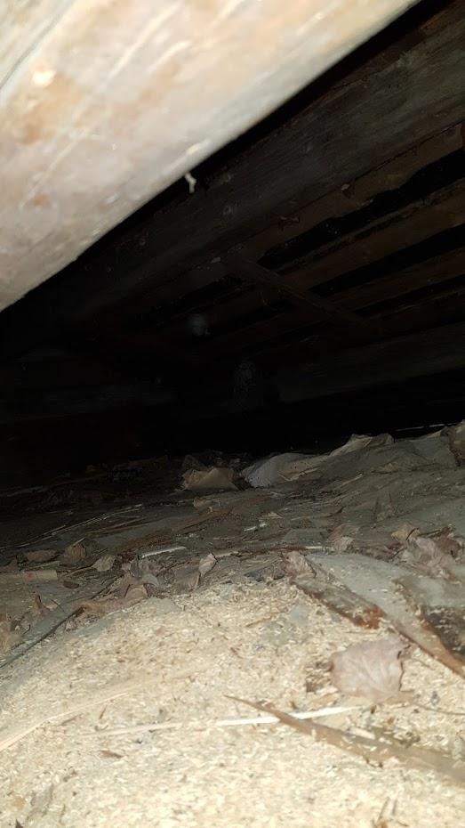 pod střechou