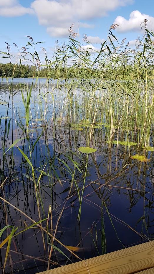 jezero a lekníny