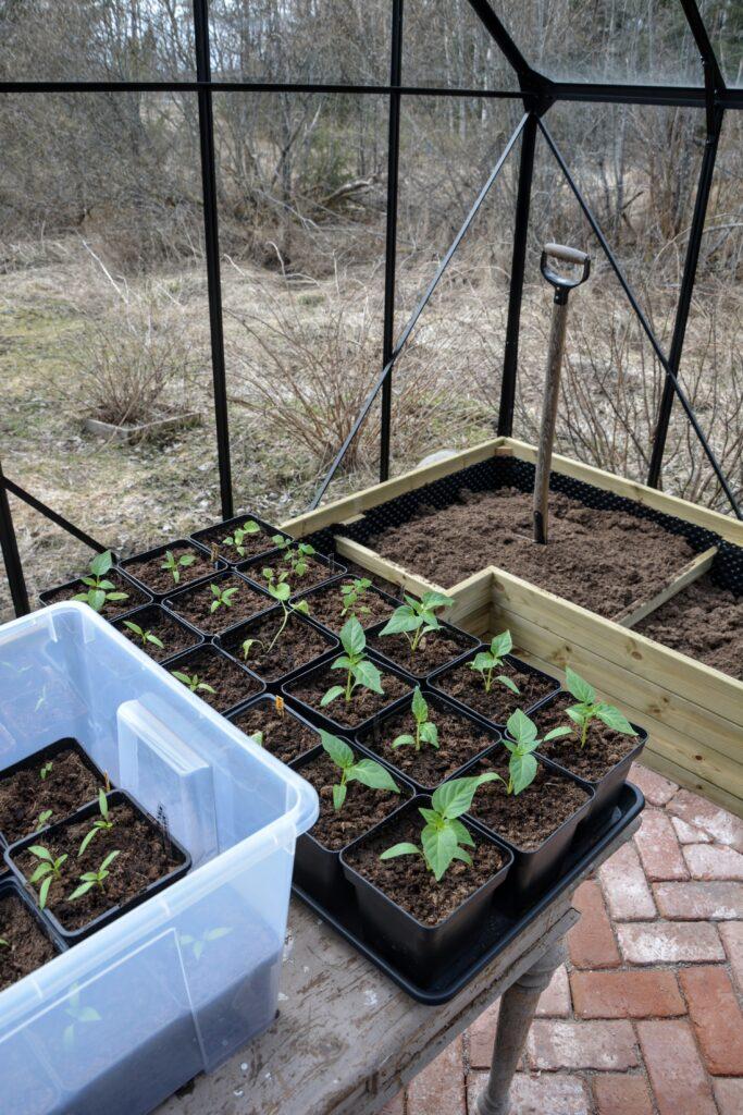 záhony ve skleníku