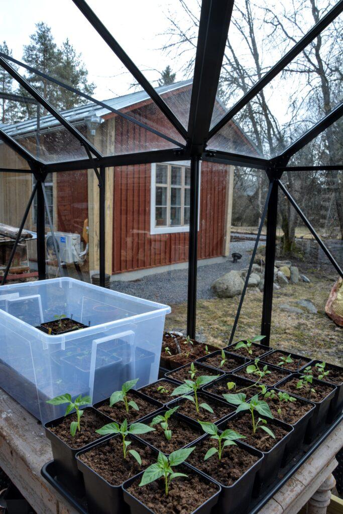 pěstování ve skleníku