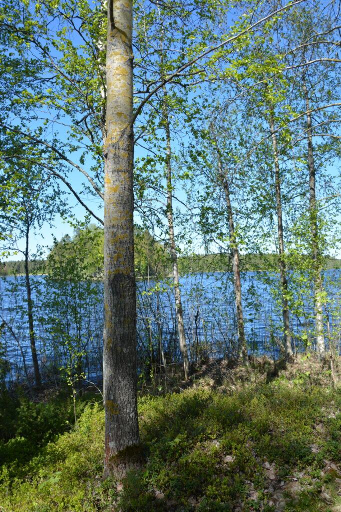 jezero ve Finsku