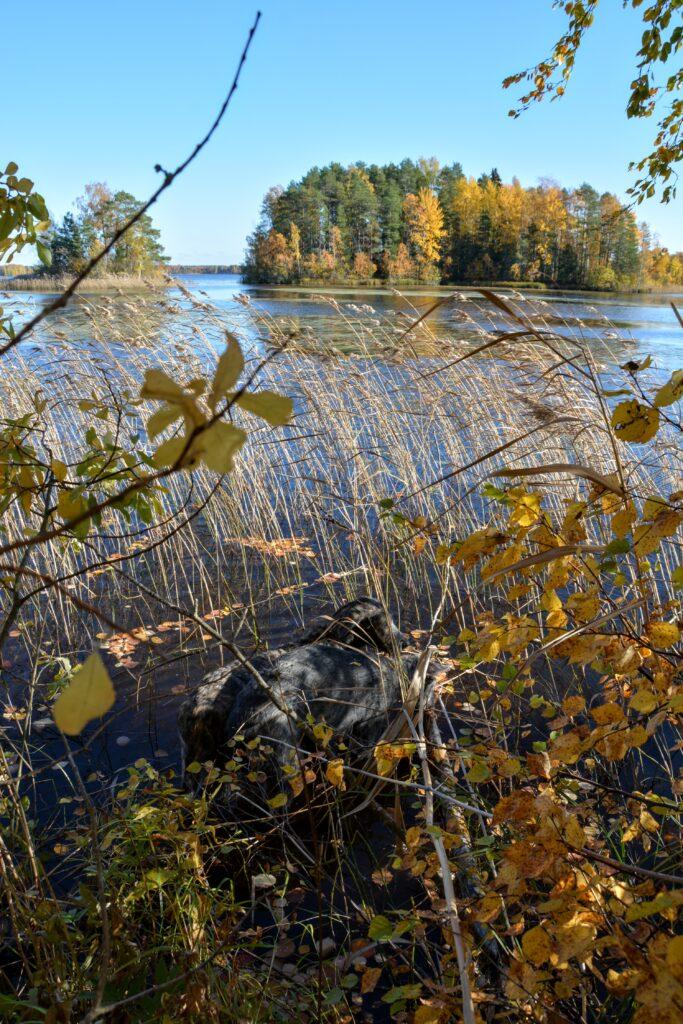 podzim ve Finsku